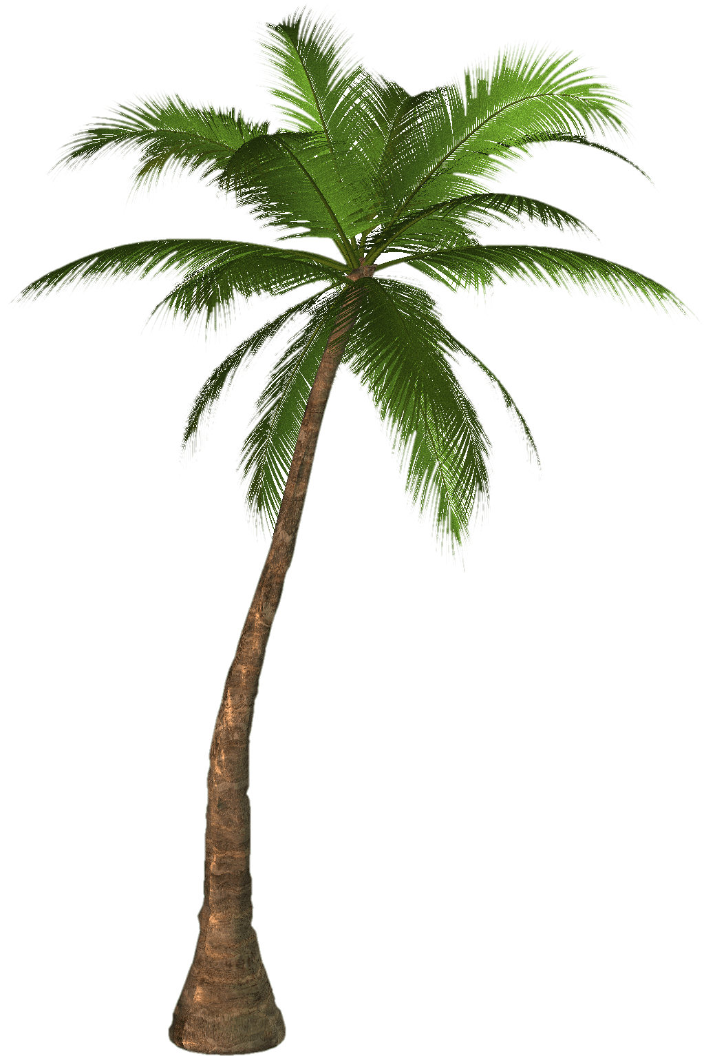 11-palm-tree-png.png