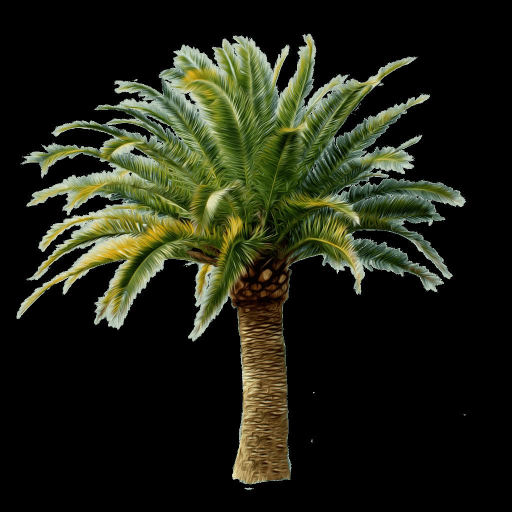 Download Palm Tree Png HQ PNG Image   FreePNGImg