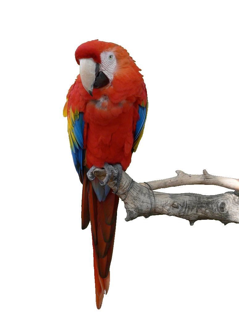 R G Parrott Ltd Download Parrot Png Hd...