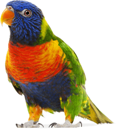 Colorful Parrot Png Images Download PNG Image