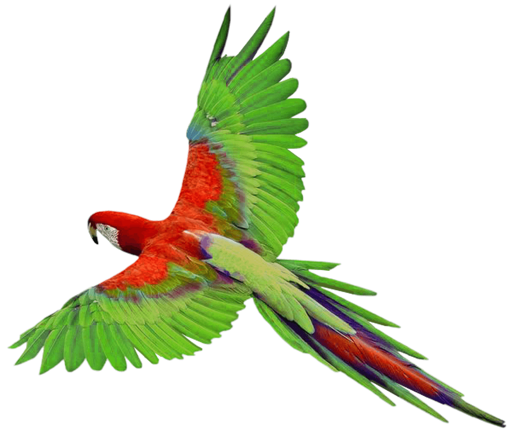 Flying Green Parrot Png Images Download PNG Image