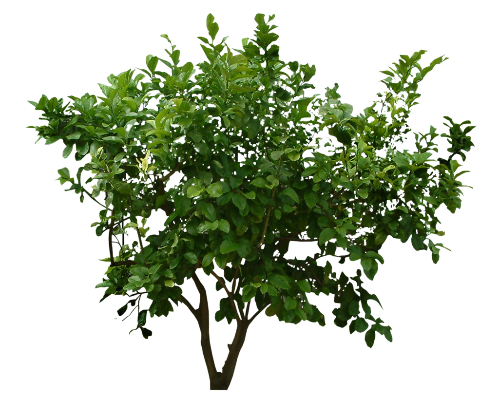 Download Plants Png File HQ PNG Image