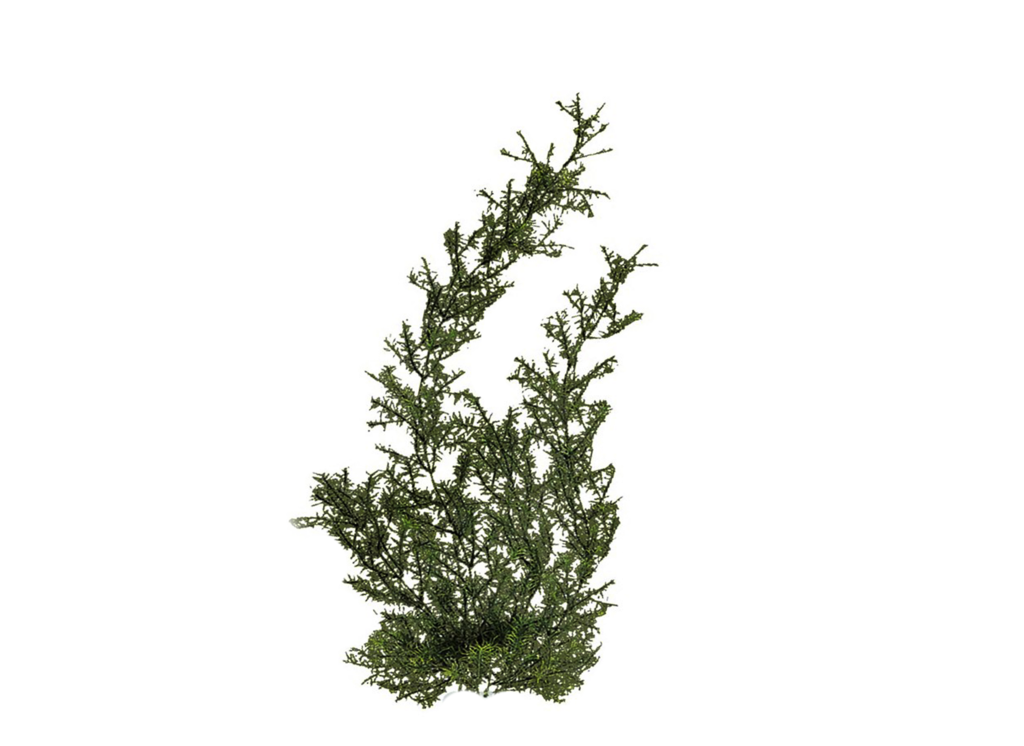 Plants Png Hd PNG Image