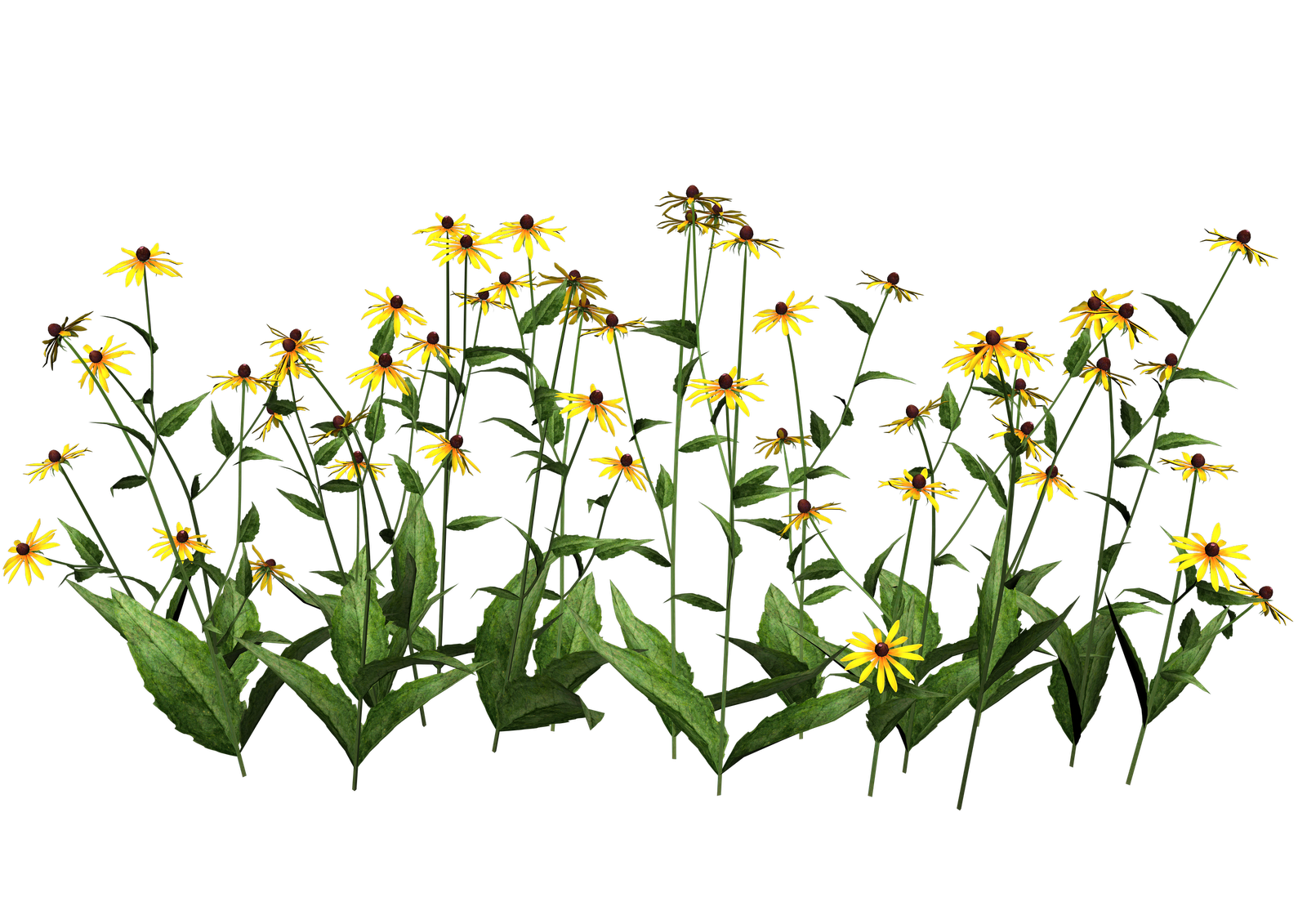 Plants Transparent PNG Image