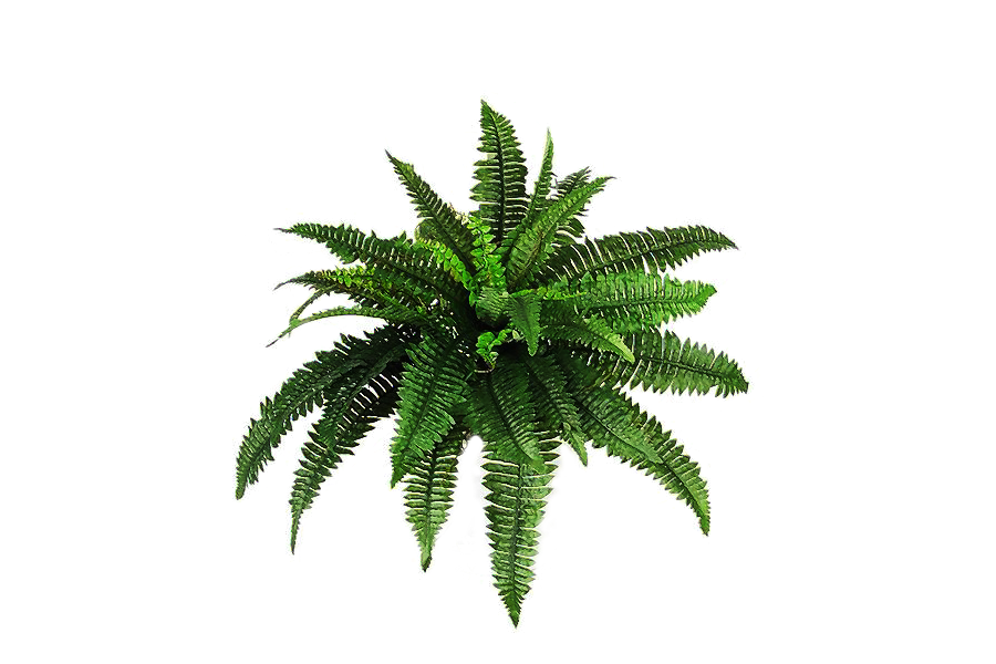 Download Plants Png Pic HQ PNG Image