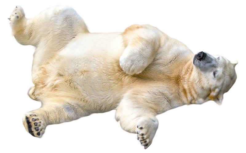 Polar Bear Transparent PNG Image