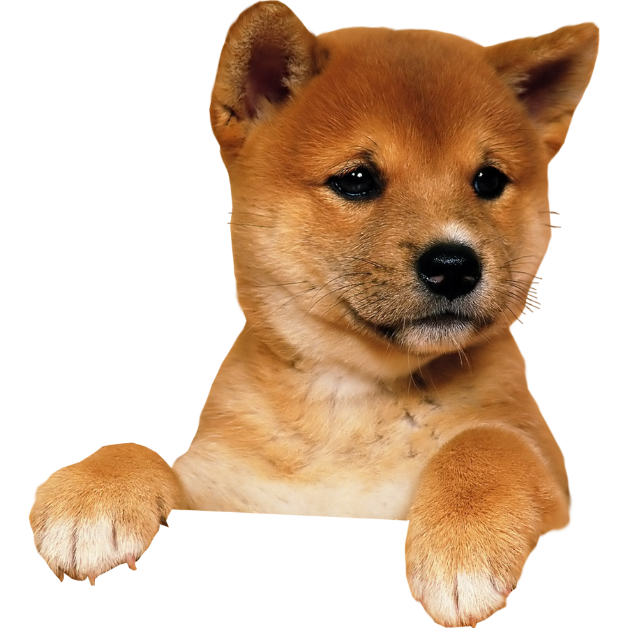 Download Puppy Image HQ PNG Image