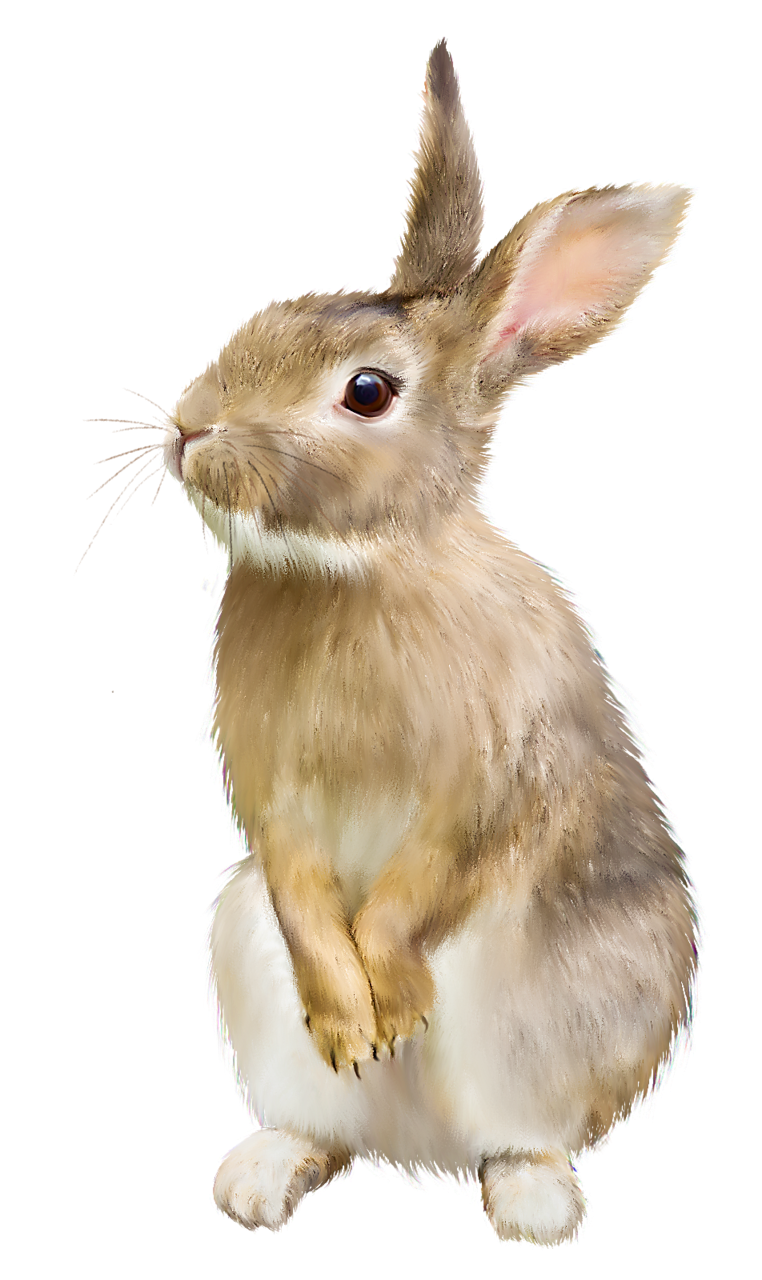 download rabbit hq png image freepngimg free bulldog clipart images bulldog clip art free downloads