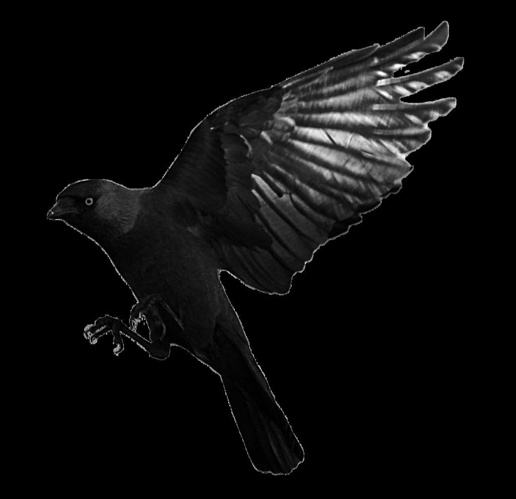 Download Raven Flying Transparent HQ PNG Image | FreePNGImg
