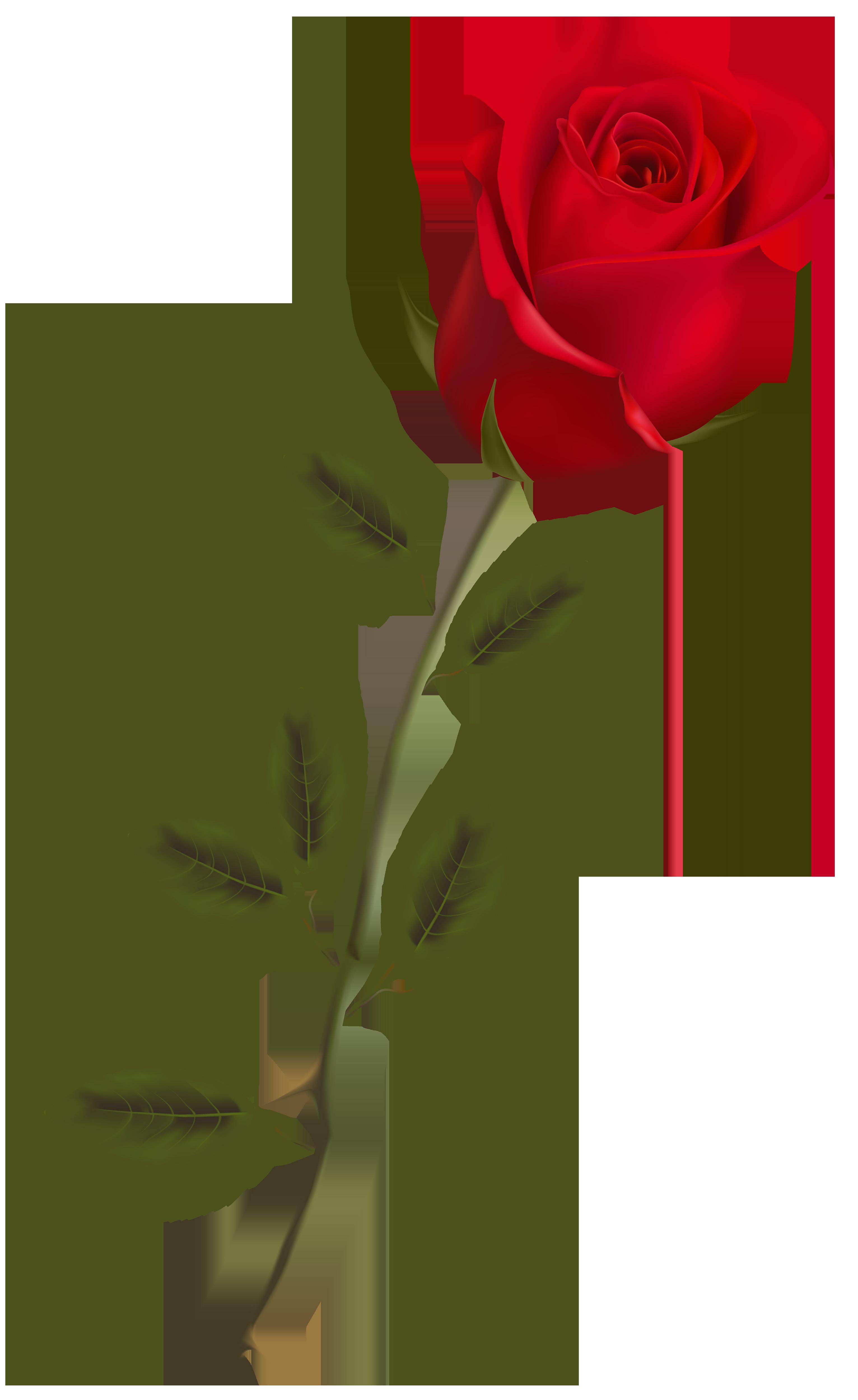 Download Rose Image Hq Png Image Freepngimg
