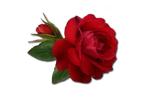 Single Red Rose Clipart PNG Image