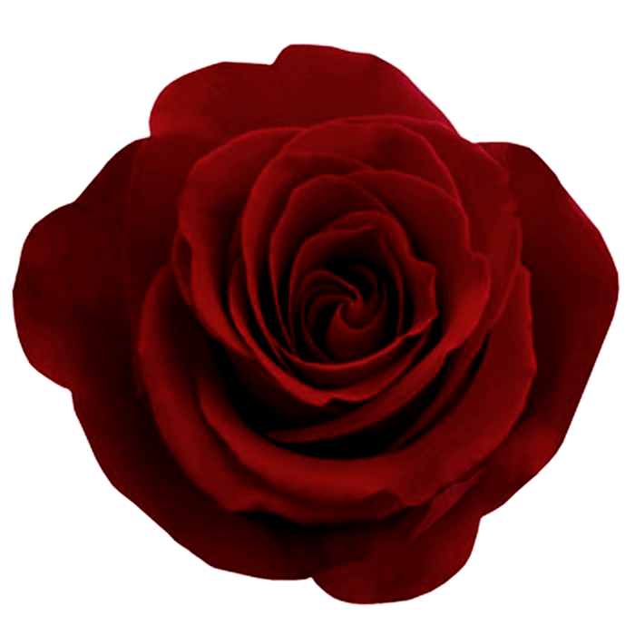 Gothic Rose Photos PNG Image