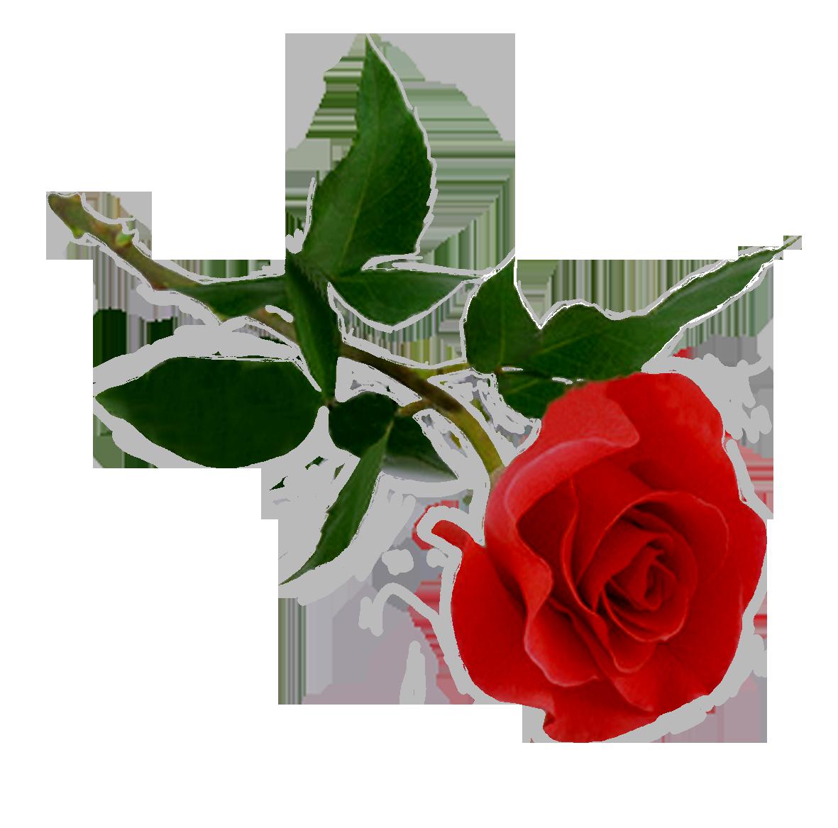 Download Rose Png Hd HQ PNG Image | FreePNGImg