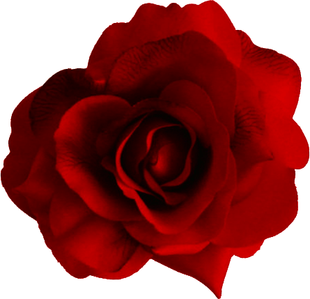 Red Rose Png Image Picture Download PNG Image