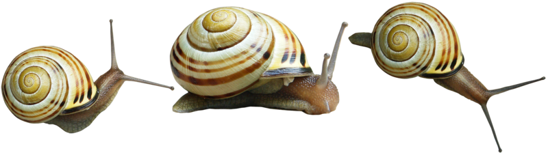 Snail Png Hd PNG Image
