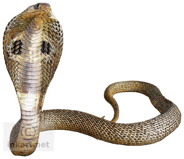 download cobra snake transparent background hq png image deer head clip art png deer head clip art black and white