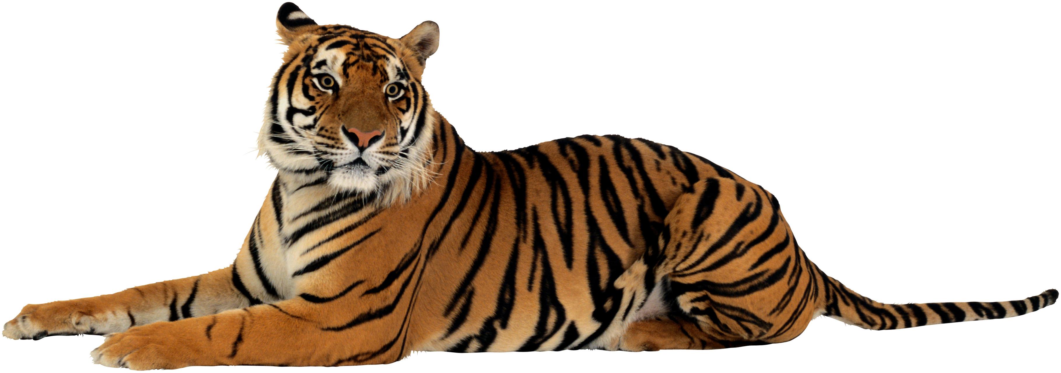 Download PNG Image   Tiger Png File