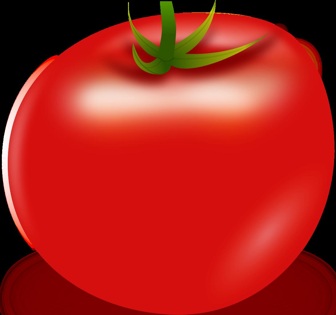 Download Tomato Vector HQ PNG Image   FreePNGImg  Vector