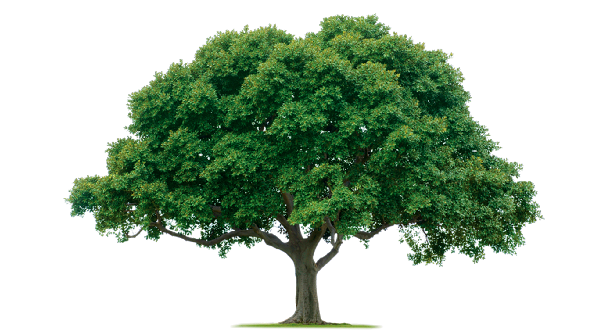 Tree Photos PNG Image