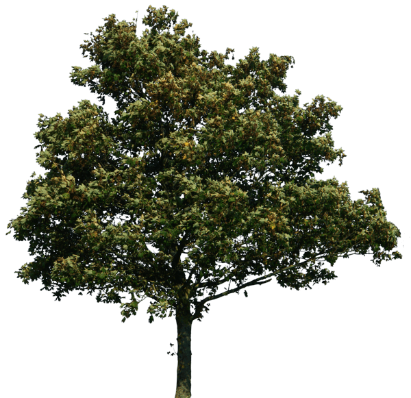 Download PNG image - Tree Png Image Download Picture 5719