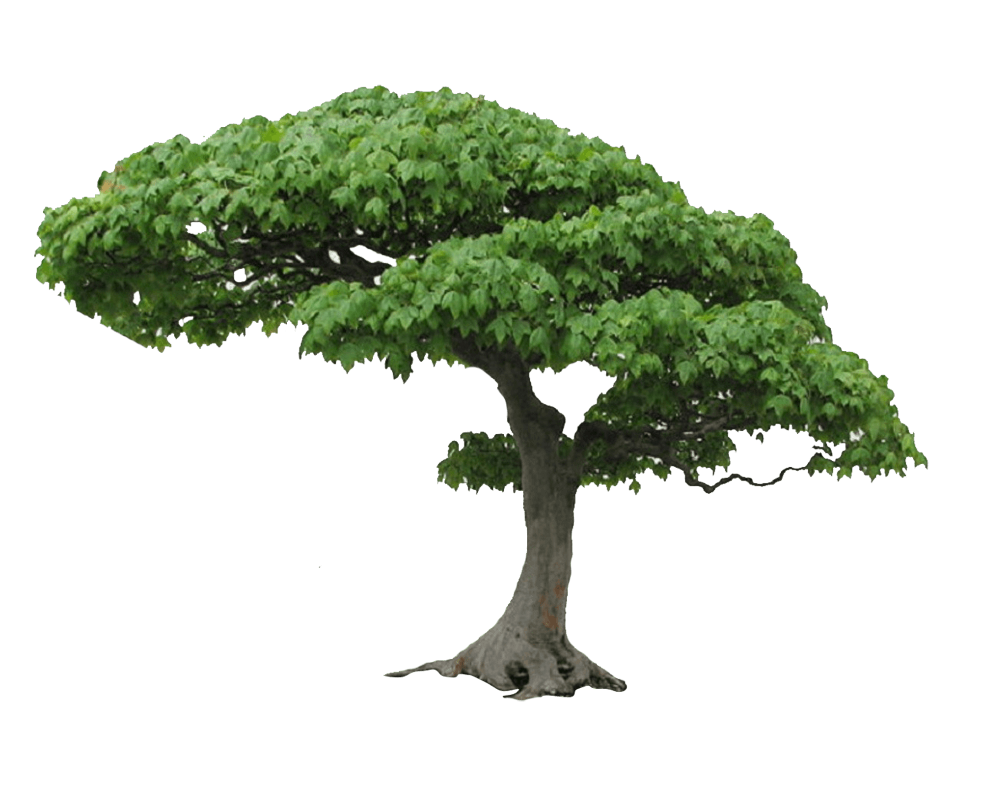 Download Tree Png Picture HQ PNG Image