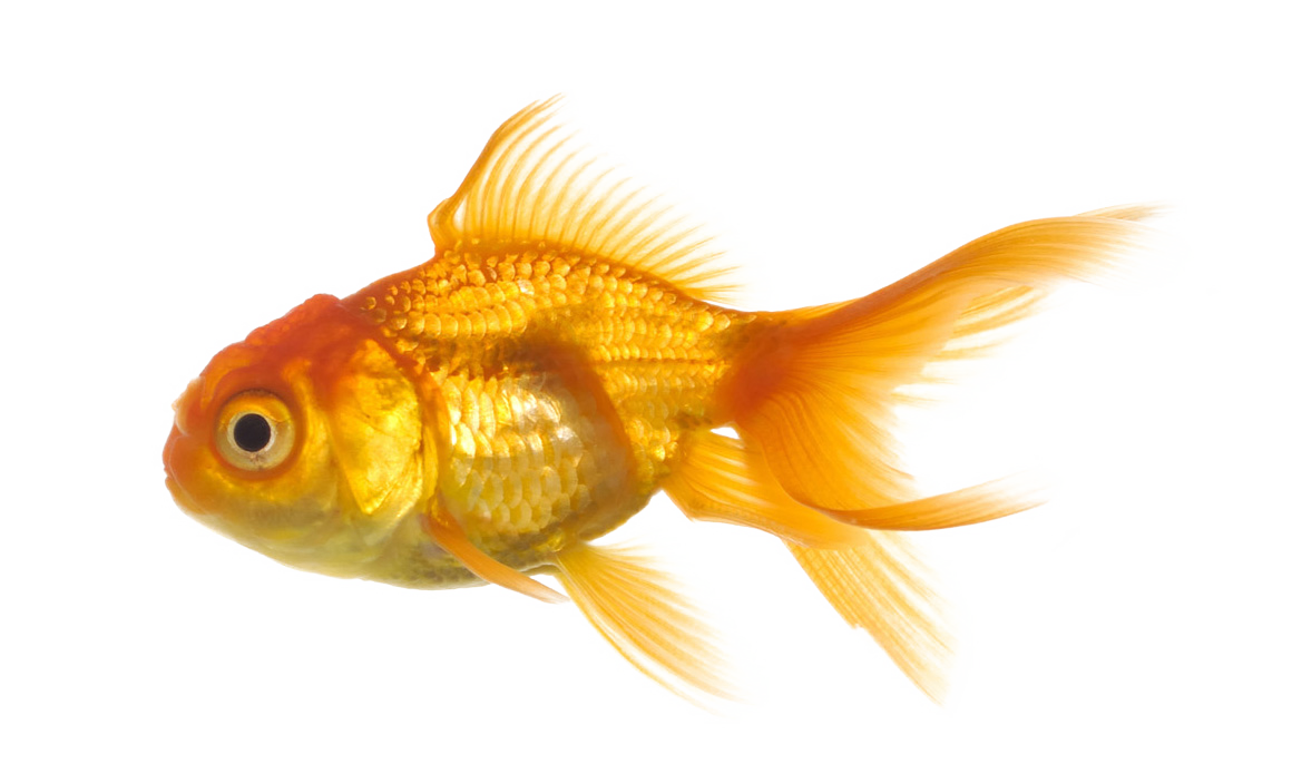 Download fish png 8 hq png image freepngimg for Image of fish