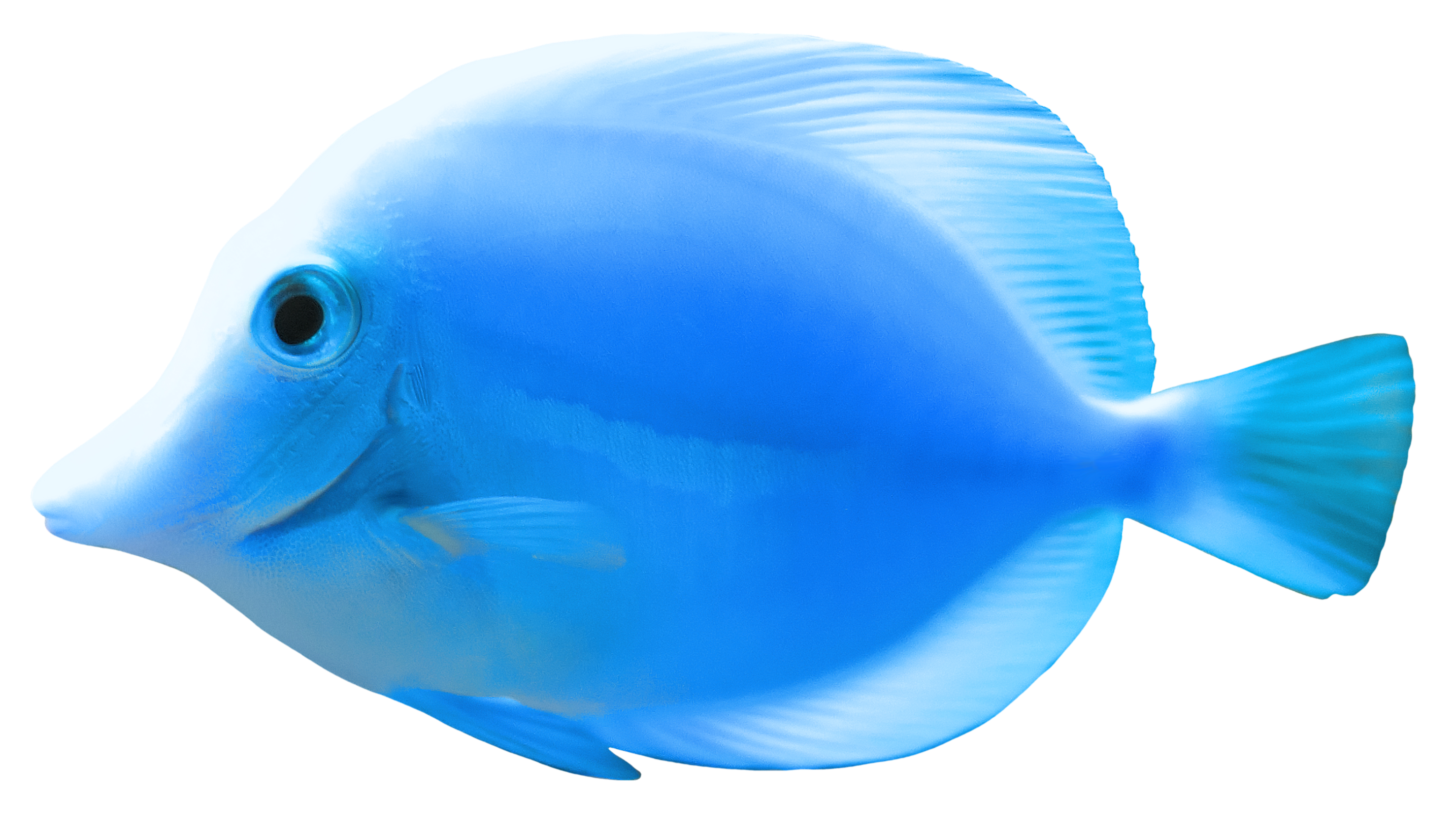Download fish png 2 hq png image freepngimg for Tropical fish images
