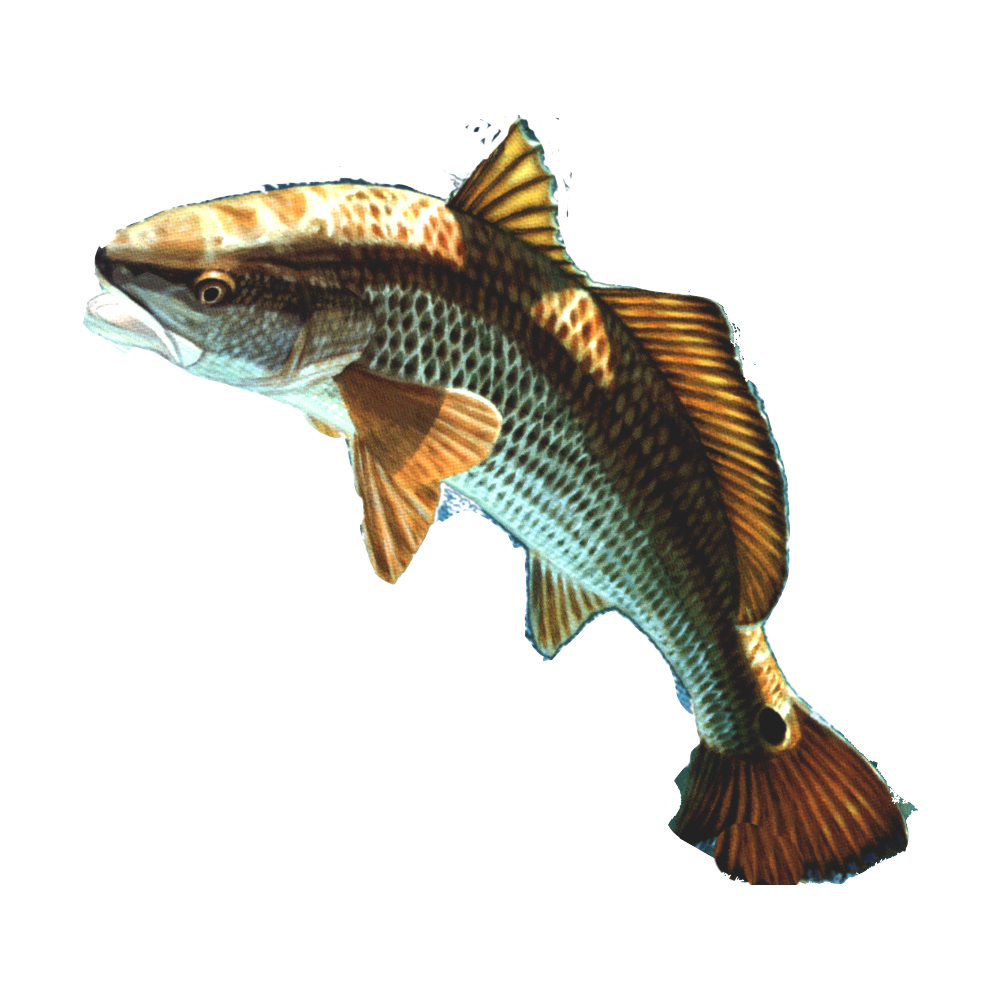 Download fish png 13 hq png image freepngimg for Image of fish