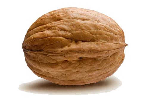Dog Nuts Food