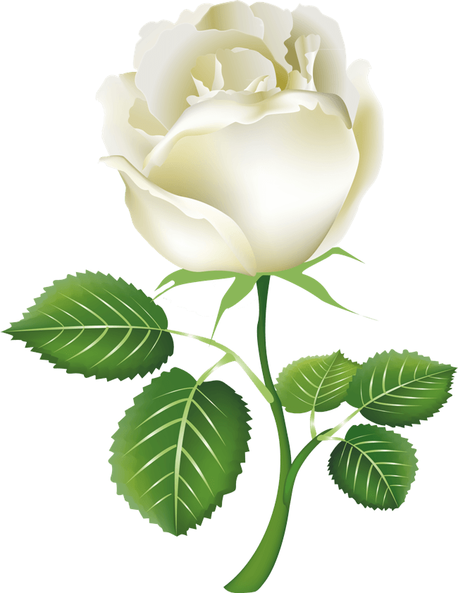 Download white rose png image flower white rose png picture hq png download png image white rose png image flower white rose png picture 1196 mightylinksfo
