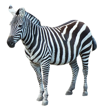 download zebra png image hq png image freepngimg zoo animals clip art black and white zoo animals clip art black and white