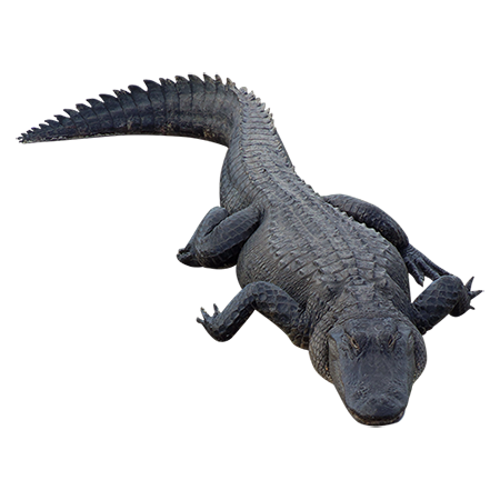 Alligator Free Download PNG Image
