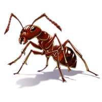 Ant Free Download Png PNG Image