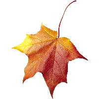 ОСЕННИЙ КЛИПАРТ 23-autumn-png-leaf-thumb