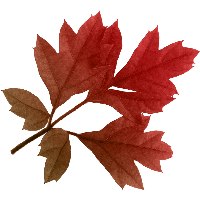 ОСЕННИЙ КЛИПАРТ 34-autumn-png-leaf-thumb