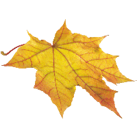 ОСЕННИЙ КЛИПАРТ 7-yellow-autumn-png-leaf-thumb
