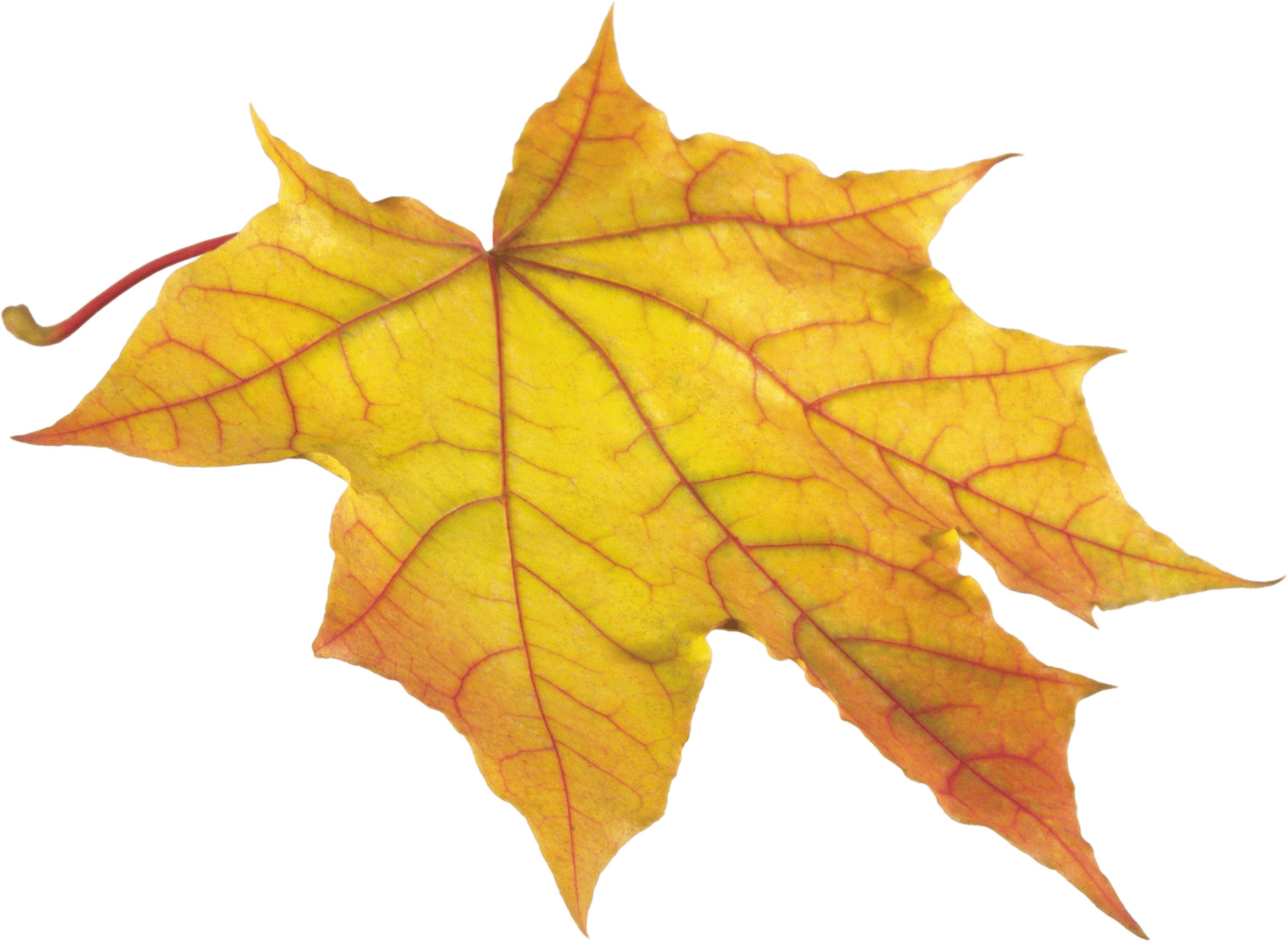 Yellow Autumn Png Leaf PNG Image