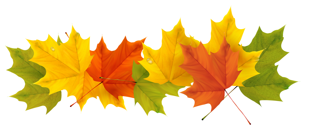 Autumn Color Leaf Tree Free Transparent Image HD PNG Image