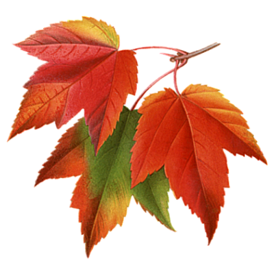 Autumn Fall Leaves Pictures Collage PNG Image