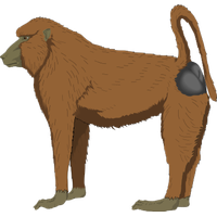 Baboon Picture PNG Image