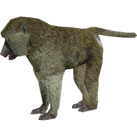 Baboon Png Clipart PNG Image