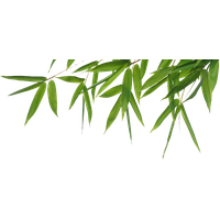 Download Bamboo Free P...