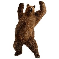 Brown Greezly Bear Png Image PNG Image
