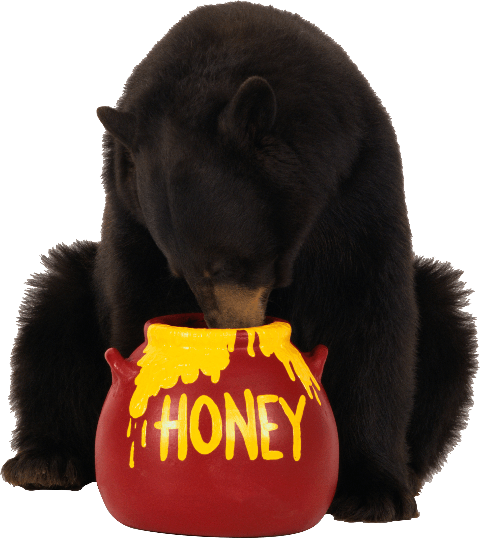Brown Bear Eats Honey Png Image PNG Image