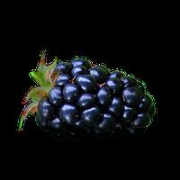 Image result for blackberries-png images