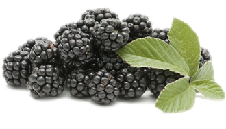 Blackberry Fruit Png Picture PNG Image