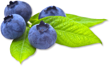 Blueberry Transparent Picture PNG Image