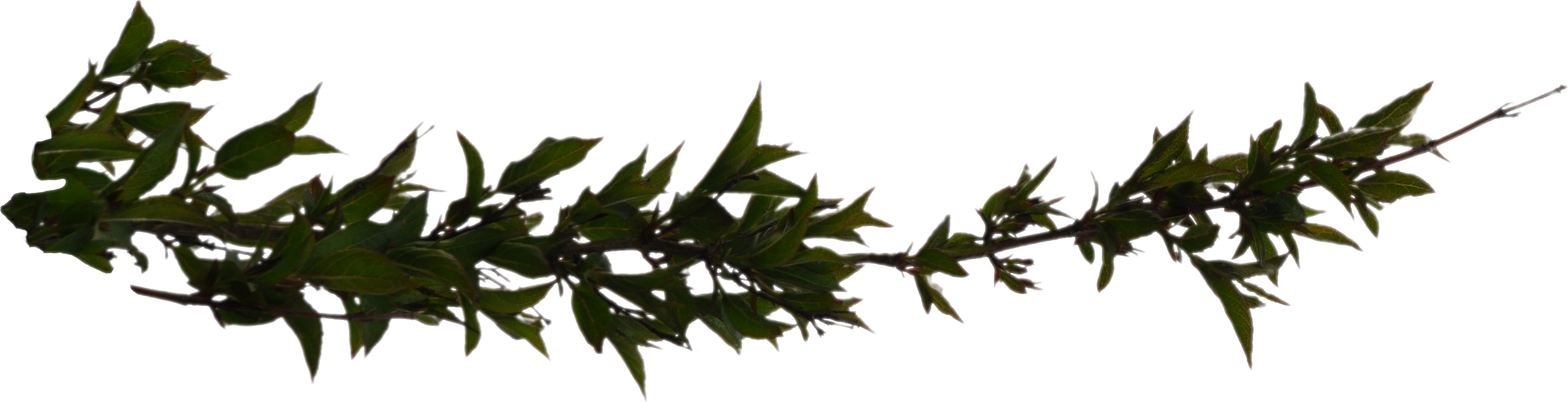 Branch Png Hd PNG Image