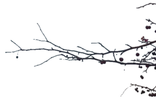 Branch Transparent PNG Image