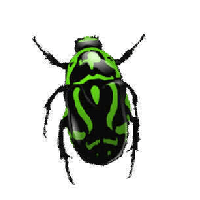 Green Bug Png Image Insect Png PNG Image